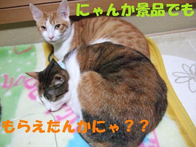 DSCF1897_convert_20081001164401.jpg