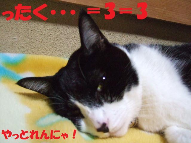 DSCF2235_20081028015730.jpg