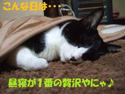 DSCF3164_convert_20081210031921.jpg