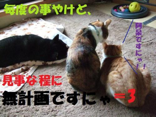 DSCF3180_convert_20081217010558.jpg