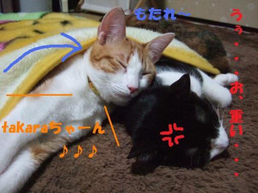 DSCF3347_20090120232059.jpg