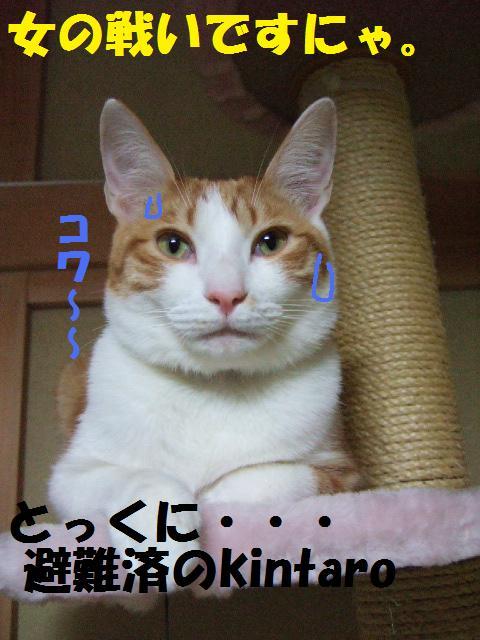 DSCF3854.jpg
