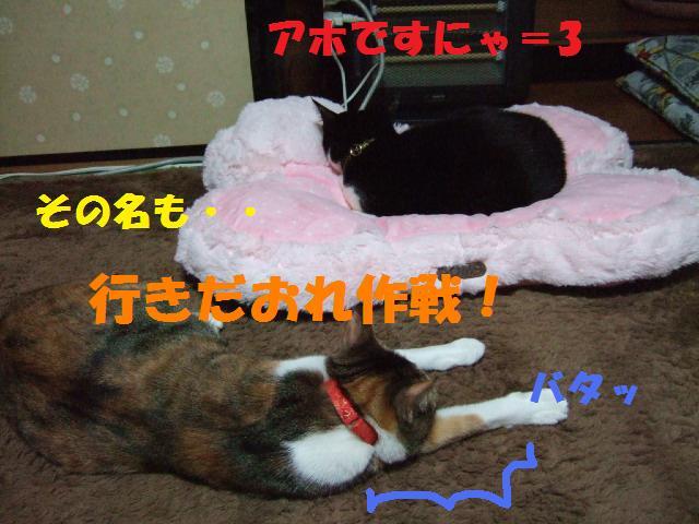 DSCF3858.jpg