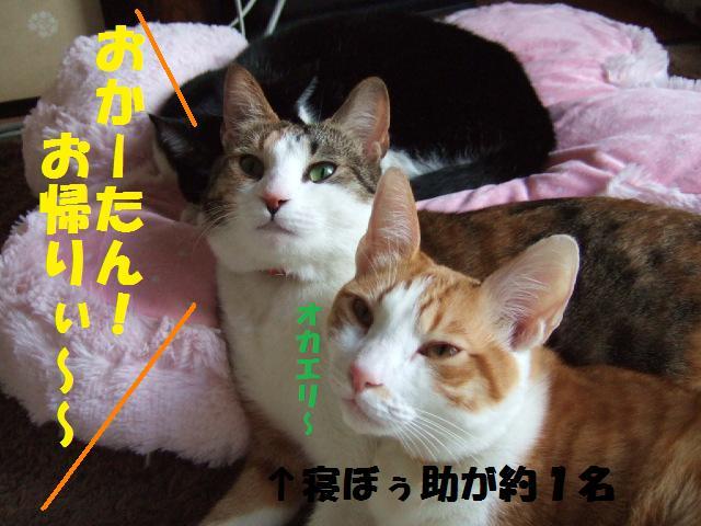 DSCF3893_20090129162138.jpg