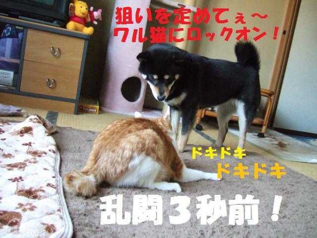 DSCF4064_convert_20090210135203.jpg