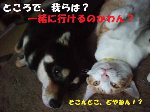 DSCF4125_convert_20090215045544.jpg