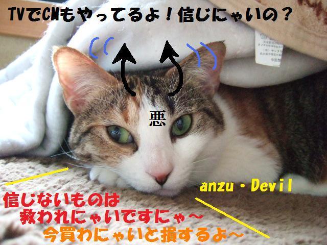 DSCF4303_20090301031219.jpg