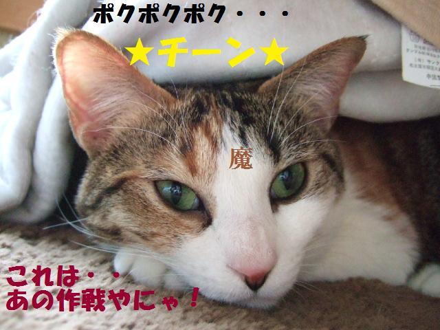 DSCF4304_20090301031533.jpg