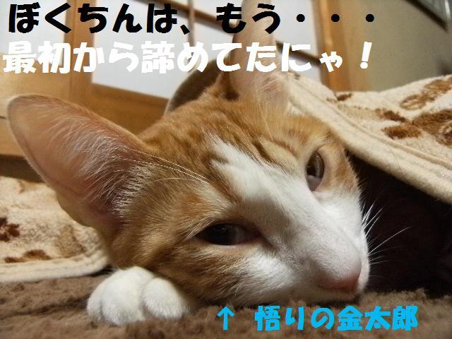 DSCF4675_20090308024639.jpg