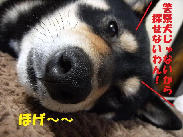 DSCF4720_20090318020202.jpg