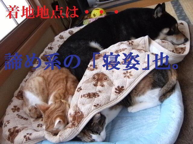 DSCF5293_20090405004636.jpg