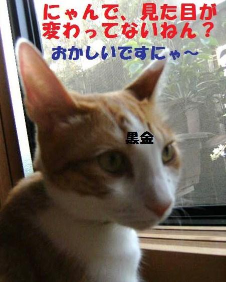 DSCF6332.jpg