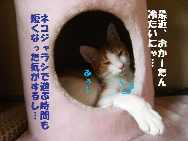 DSCF6432.jpg