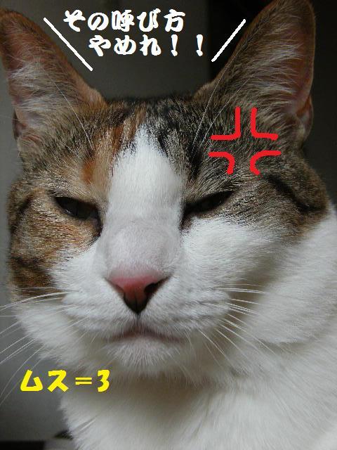 DSCF7274.jpg