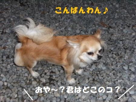 DSCF7348.jpg