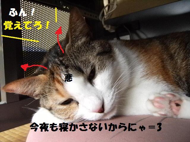 DSCF7467.jpg