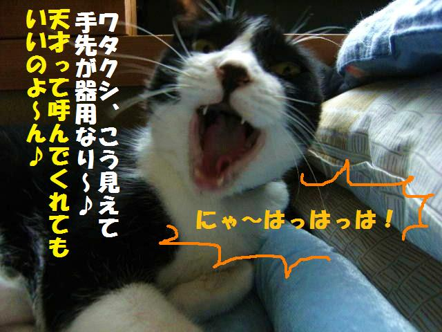 DSCF7469.jpg