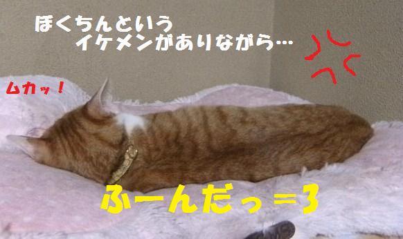 DSCF8733.jpg