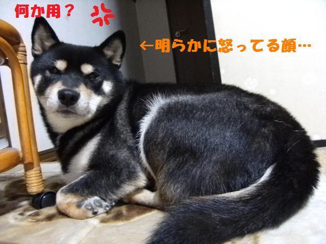 DSCF8785_20091017032520.jpg