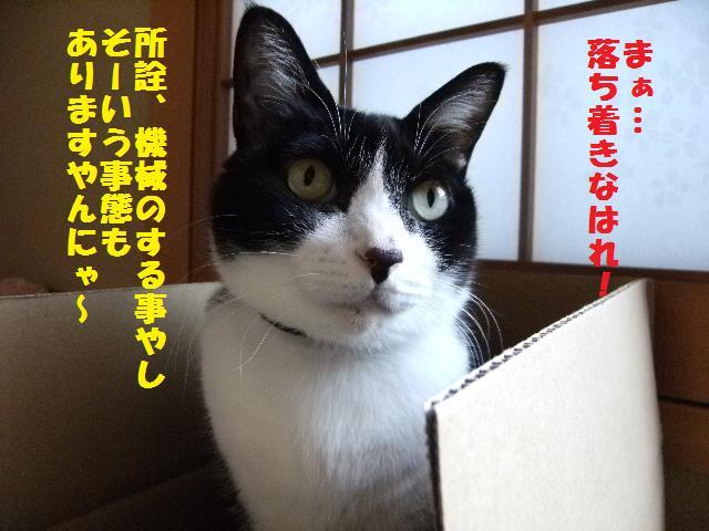 DSCF9146.jpg