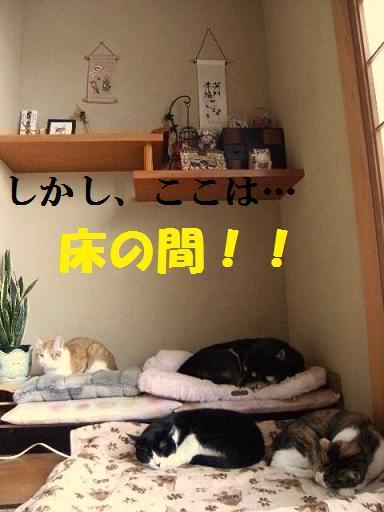 DSCF9266_20091126014754.jpg