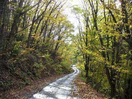 林道の黄葉