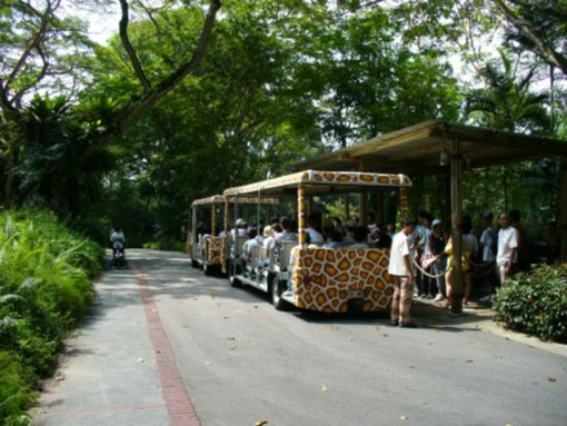 動物園内のバス