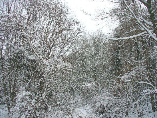 雪の林の中