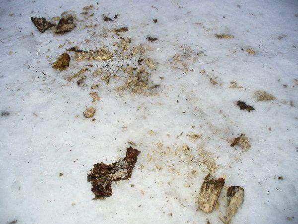 雪上の木屑