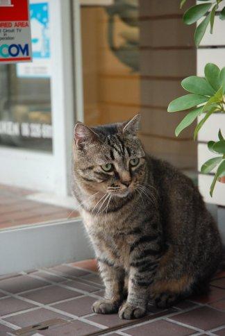 cat11-1.jpg