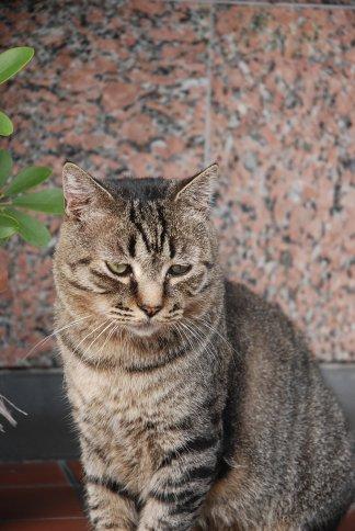 cat11-2.jpg