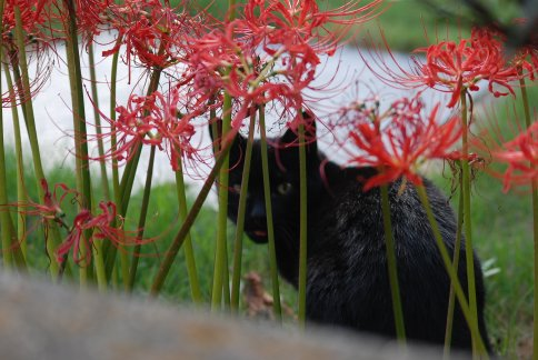 cat11-3.jpg