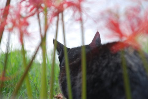 cat11-4.jpg