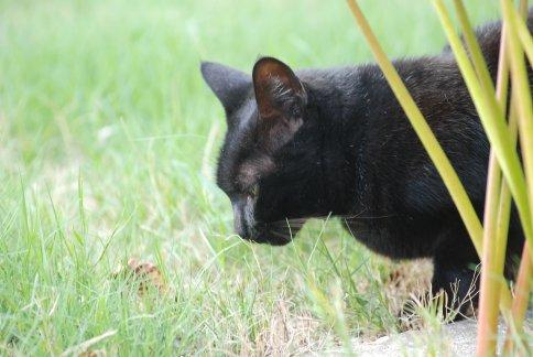 cat11-5.jpg
