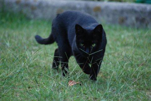 cat11-8.jpg