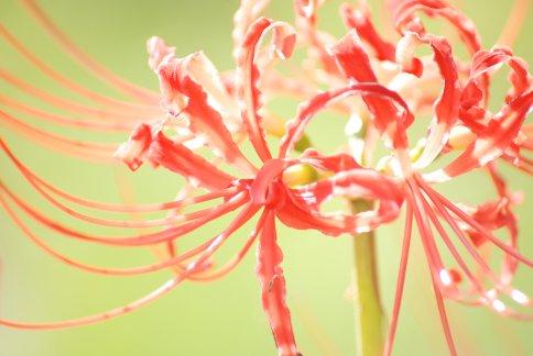 flower11-2.jpg