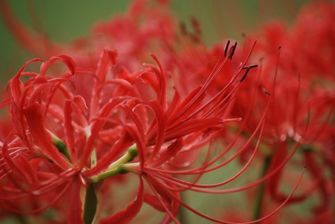 flower11-4.jpg