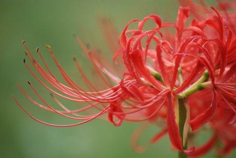 flower11-6.jpg