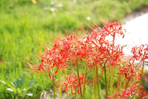 flower11-7.jpg