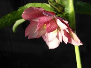 crescent_flowershop-img600x450-12344043988jknto9899.jpg