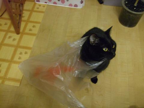 この袋ずっとついて来るにゃ
