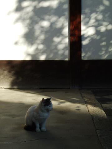 等持院のネコさん