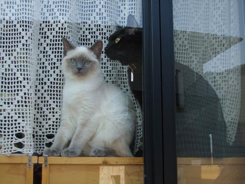 窓辺のココ美々