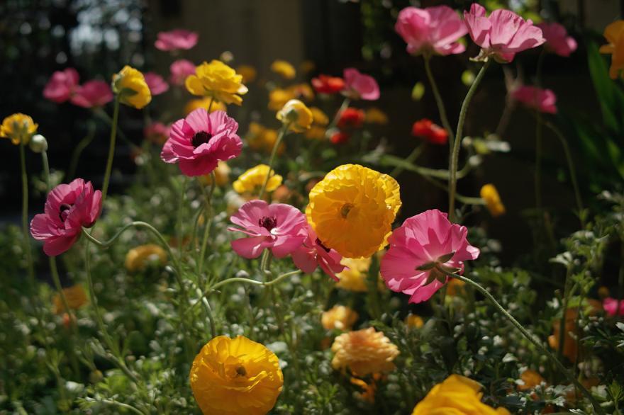 DP2 春 2009 花 オレンジ ピンク