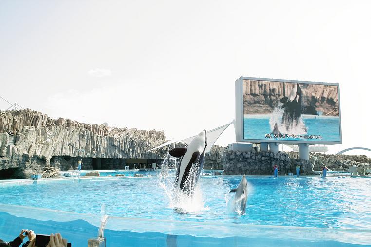 クーちゃん 飛ぶ イルカ 名古屋港水族館 トレーニング
