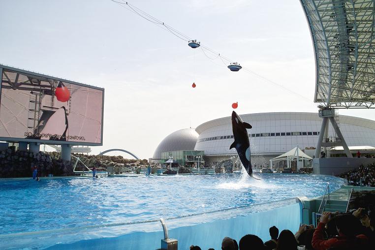 クーちゃん 飛ぶ 名古屋港水族館 ボール トレーニング