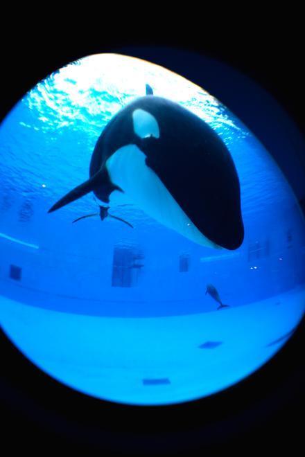 クーちゃん 愛嬌 見下ろす 名古屋港水族館
