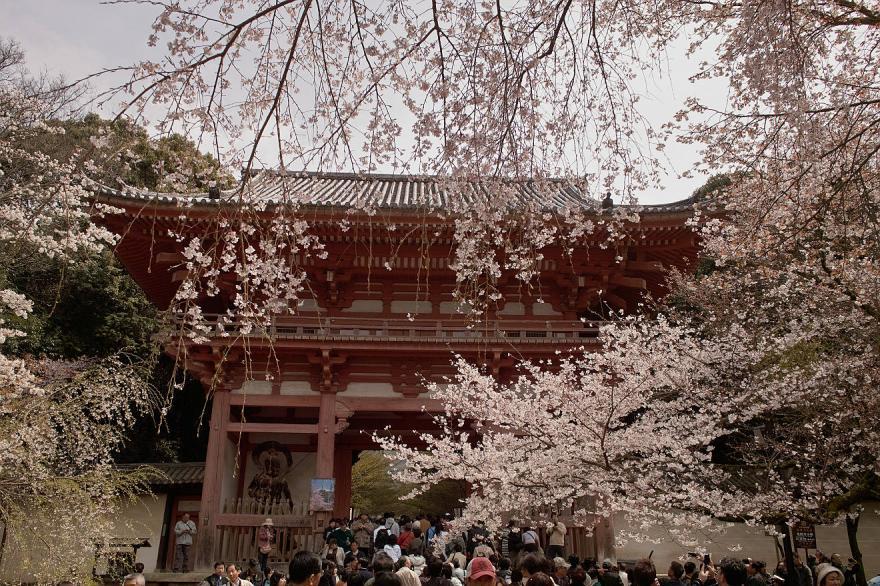 醍醐寺 門 サクラ 京都 2009 DP1