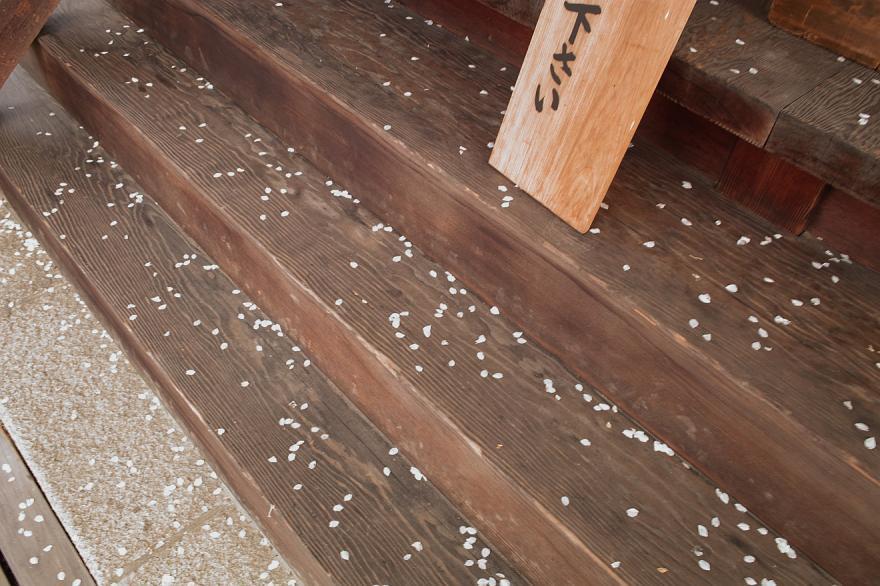 花びら 階段 サクラ 醍醐寺 京都 2009 DP1