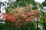 春~紅葉9